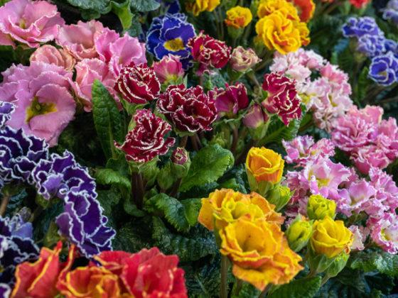 Photo bouquet monsieur fleur